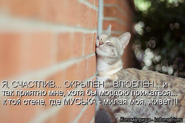 Котоматрица: Я, СЧАСТЛИВ... ОКРЫЛЁН... ВЛЮБЛЁН... и так приятно мне, хотя бы мордою прижаться... так приятно мне, хотя бы мордою прижаться... к той стене, где МУ