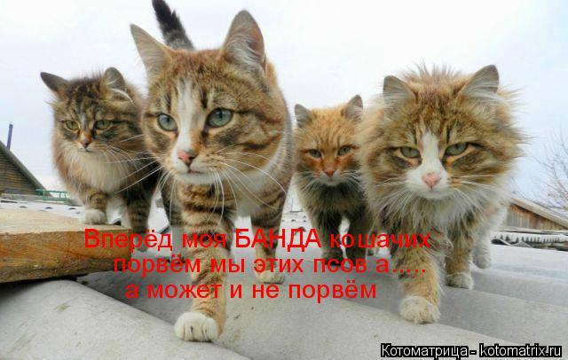 Котоматрица: Вперёд моя БАНДА кошачих порвём мы этих псов а..... а может и не порвём