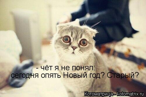 Котоматрица: - чёт я не понял: сегодня опять Новый год? Старый?