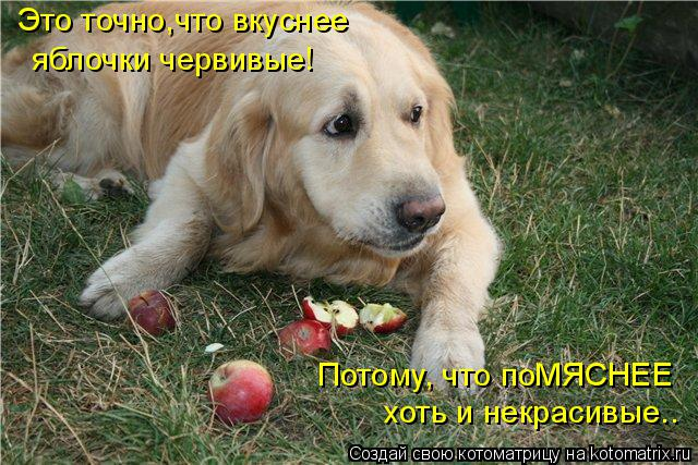 Котоматрица: Это точно,что вкуснее яблочки червивые! Потому, что поМЯСНЕЕ хоть и некрасивые..