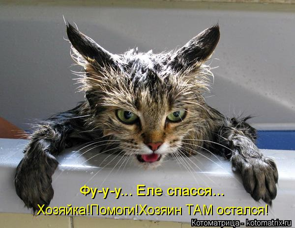 Котоматрица: Хозяйка!Помоги!Хозяин ТАМ остался! Фу-у-у... Еле спасся...
