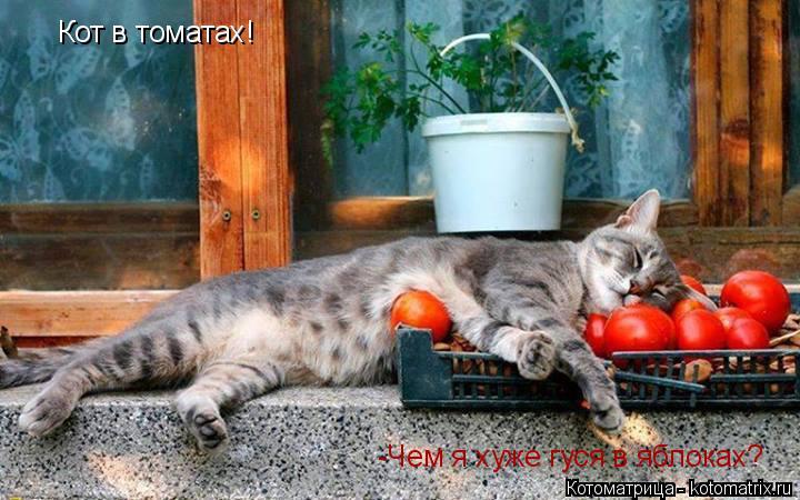 Котоматрица: Кот в томатах!  -Чем я хуже гуся в яблоках?