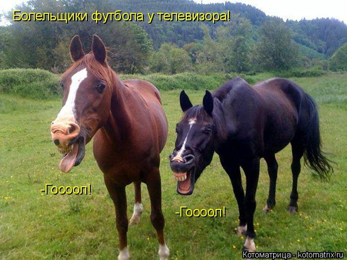 Поглядела Это Гортоповский Конь Что потом
