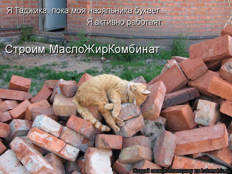 Котоматрица: Я Таджика, пока моя насяльника бухает... Я активно работаят Строим МаслоЖирКомбинат