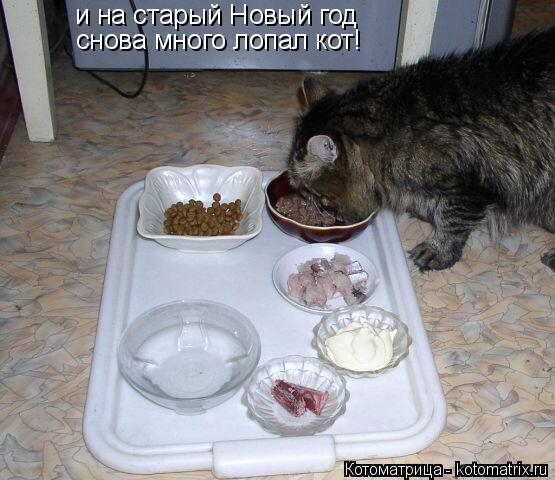 Котоматрица: и на старый Новый год снова много лопал кот!