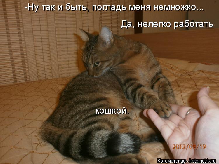Котоматрица: -Ну так и быть, погладь меня немножко... Да, нелегко работать кошкой.