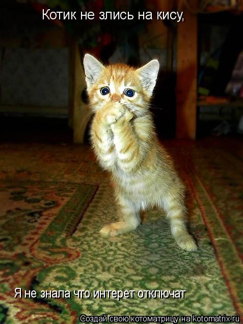 Котоматрица: Котик не злись на кису, Я не знала что интерет отключат