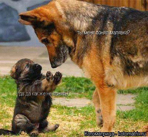 Котоматрица: ты меня понял малявка? да да как же не понять!
