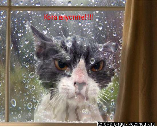 Котоматрица: Кота впустите!!!!!