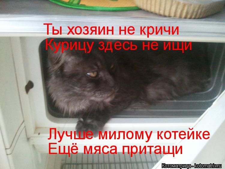 Котоматрица: Ты хозяин не кричи Курицу здесь не ищи Лучше милому котейке Ещё мяса притащи
