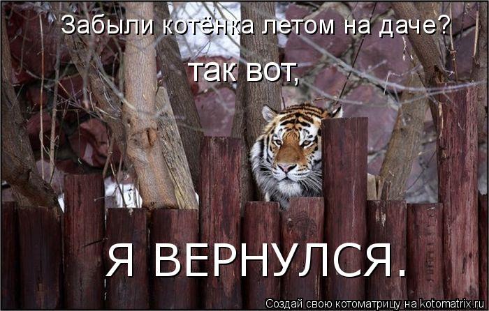 Котоматрица: так вот, Я ВЕРНУЛСЯ. Забыли котёнка летом на даче?