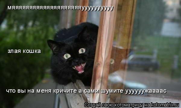 Котоматрица: что вы на меня кричите а сами шумите уууууужаааас мяяяяяяяяяяяяяяяяяяяяуууууууууу злая кошка