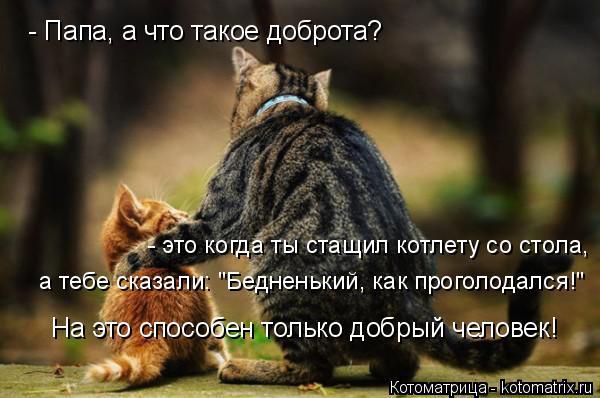 """Котоматрица: - Папа, а что такое доброта? - это когда ты стащил котлету со стола, а тебе сказали: """"Бедненький, как проголодался!"""" На это способен только добр"""