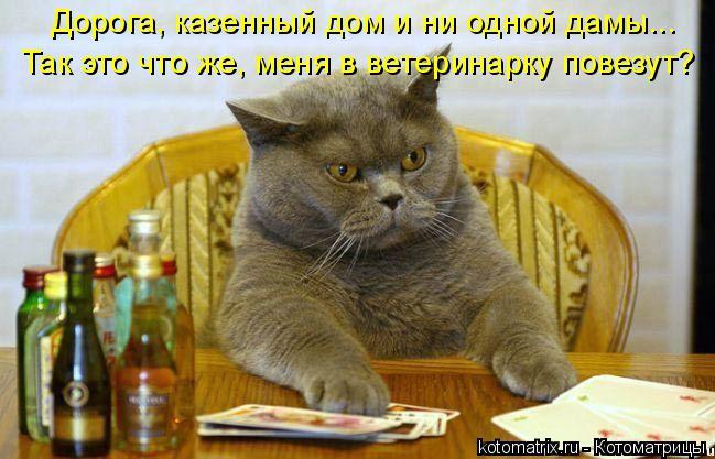 Котоматрица: Дорога, казенный дом и ни одной дамы... Так это что же, меня в ветеринарку повезут?