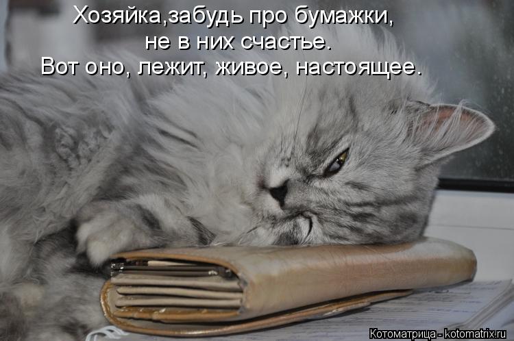 Котоматрица: Хозяйка,забудь про бумажки, не в них счастье. Вот оно, лежит, живое, настоящее.