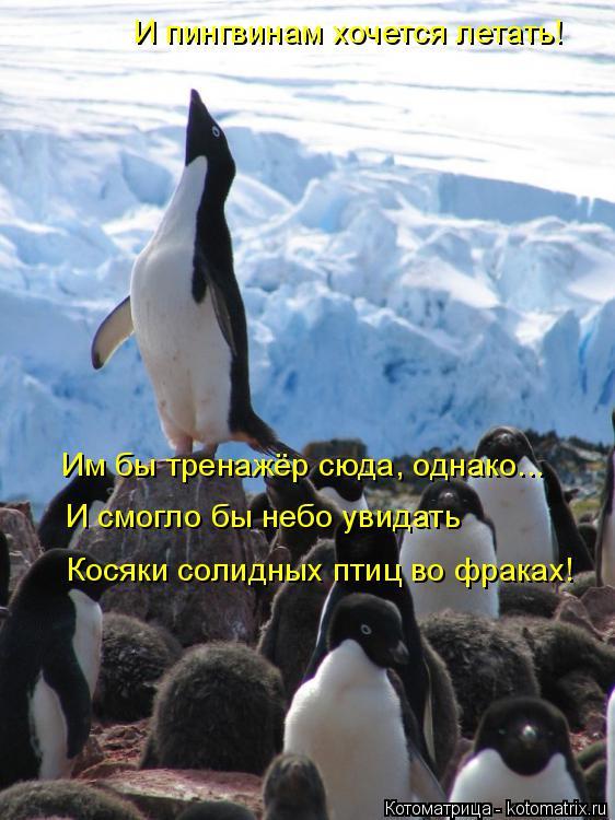Котоматрица: И пингвинам хочется летать! Им бы тренажёр сюда, однако... И смогло бы небо увидать Косяки солидных птиц во фраках!