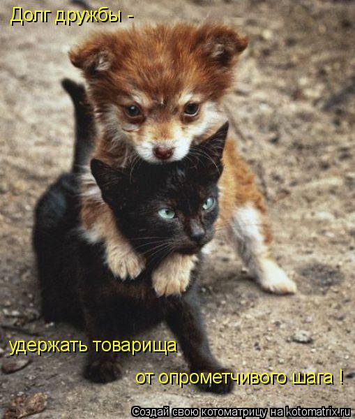 Котоматрица: Долг дружбы -  удержать товарища от опрометчивого шага !