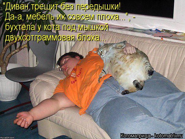 """Котоматрица: """"Диван трещит без передышки! Да-а, мебель их совсем плоха..."""", -  бухтела у кота под мышкой двухсотграммовая блоха..."""