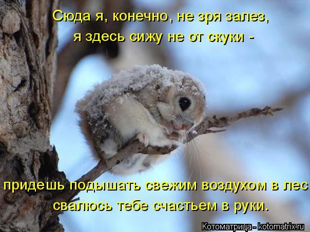 Котоматрица: Сюда я, конечно, не зря залез, я здесь сижу не от скуки -  придешь подышать свежим воздухом в лес -  свалюсь тебе счастьем в руки.