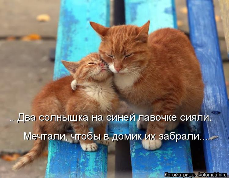 Котоматрица: ...Два солнышка на синей лавочке сияли. Мечтали, чтобы в домик их забрали...