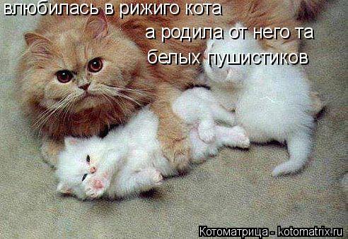 Котоматрица: влюбилась в рижиго кота  а родила от него та  белых пушистиков
