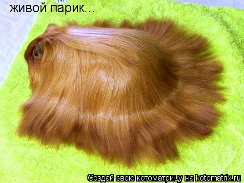Котоматрица: живой парик...