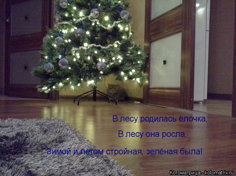 Котоматрица: В лесу родилась ёлочка, В лесу она росла, Зимой и летом стройная, зелёная была!
