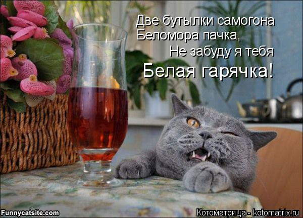 Котоматрица: Две бутылки самогона Беломора пачка, Не забуду я тебя Белая гарячка!