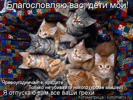 Котоматрица: Благословляю вас, дети мои! Чревоугодничайте, крадите Я отпускаю вам все ваши грехи Только не убивайте никого (кроме мышей)