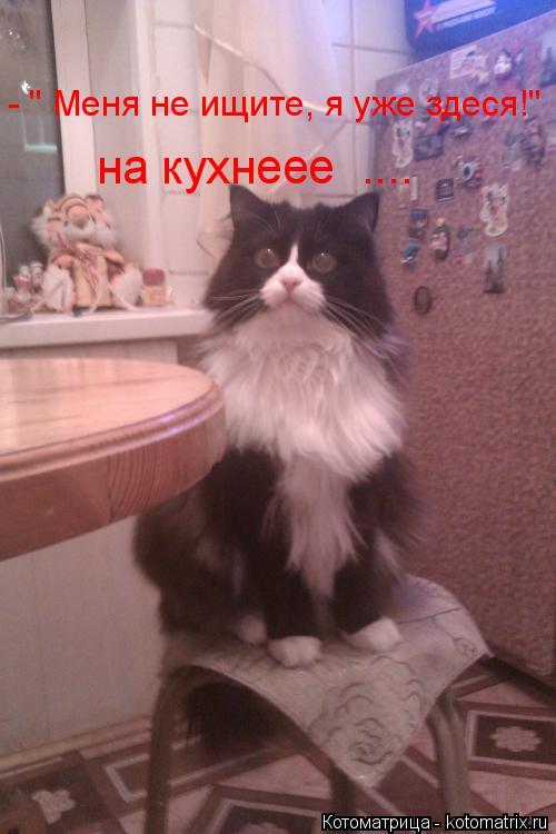 """Котоматрица: - """" Меня не ищите, я уже здеся!"""" на кухнеее  ...."""