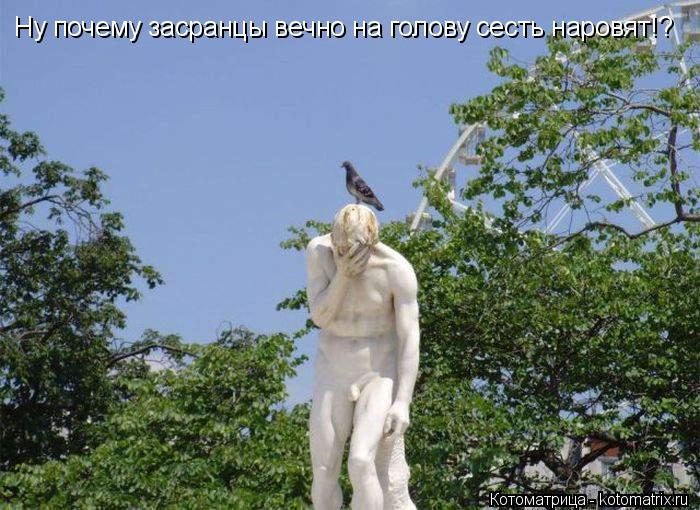 Котоматрица: Ну почему засранцы вечно на голову сесть наровят!?