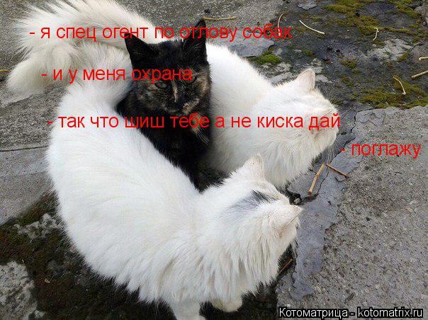 Котоматрица: - я спец огент по отлову собак - и у меня охрана - так что шиш тебе а не киска дай  - поглажу