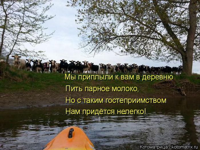 Котоматрица: Мы приплыли к вам в деревню Пить парное молоко, Но с таким гостеприимством Нам придётся нелегко!