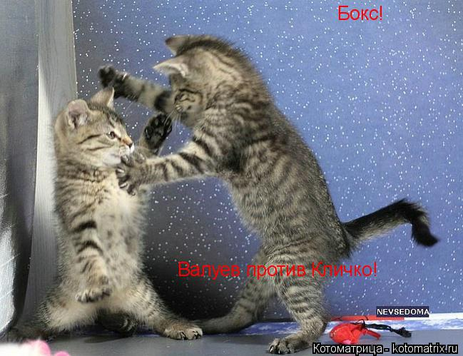 Котоматрица: Бокс! Валуев против Кличко!