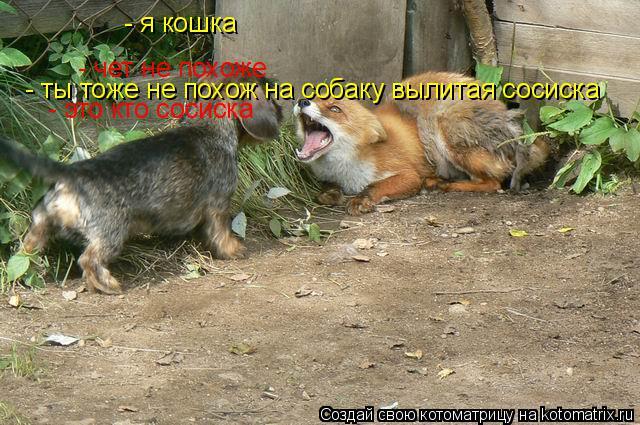 Котоматрица: - чет не похоже - я кошка - ты тоже не похож на собаку вылитая сосиска - это кто сосиска
