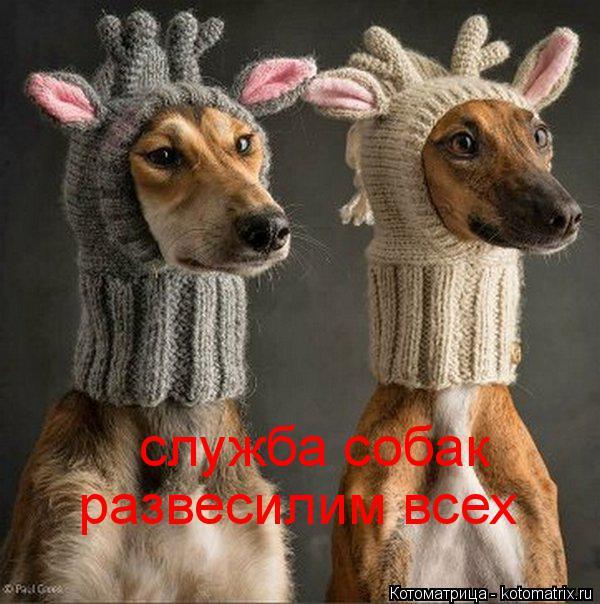 Котоматрица: служба собак  развесилим всех