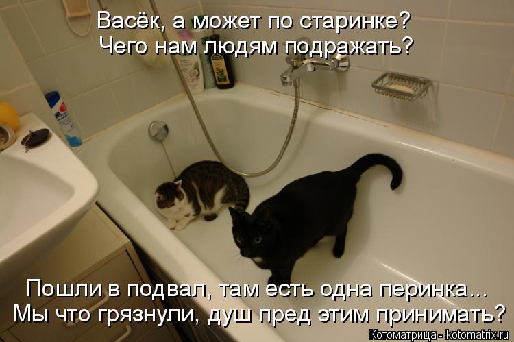 Котоматрица: Васёк, а может по старинке? Чего нам людям подражать? Мы что грязнули, душ пред этим принимать? Пошли в подвал, там есть одна перинка...