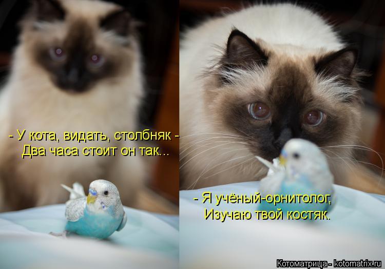 Котоматрица: - У кота, видать, столбняк - Два часа стоит он так... - Я учёный-орнитолог, Изучаю твой костяк.
