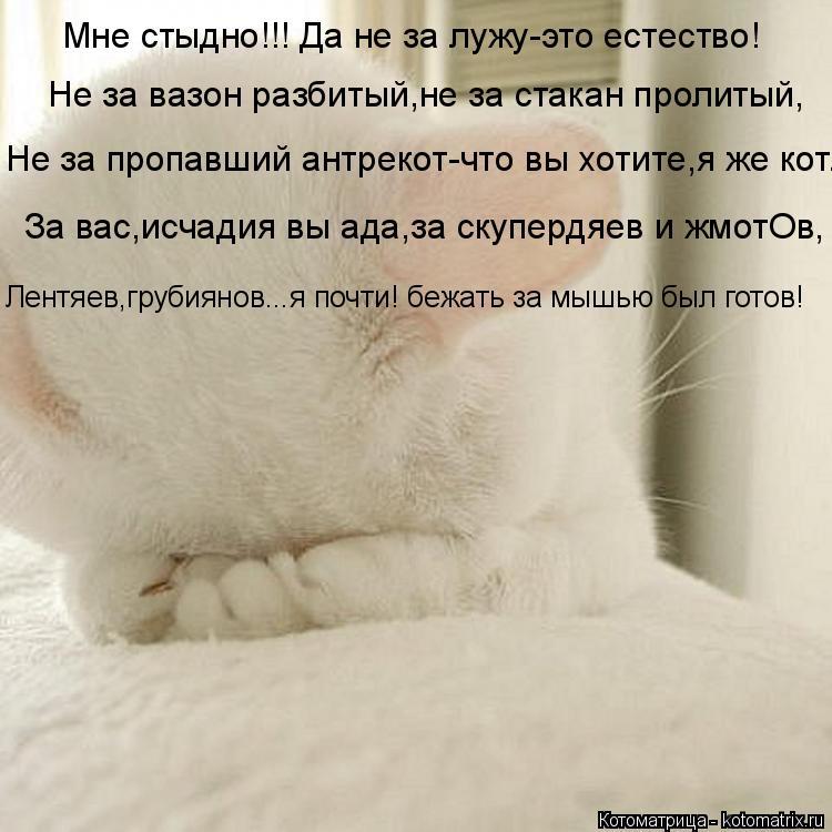 Котоматрица: Мне стыдно!!! Да не за лужу-это естество! Не за вазон разбитый,не за стакан пролитый, Не за пропавший антрекот-что вы хотите,я же кот. За вас,ис
