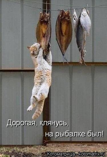 Котоматрица: Дорогая, клянусь,  на рыбалке был!