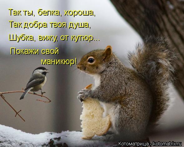 Котоматрица: Так ты, белка, хороша, Так добра твоя душа, Шубка, вижу, от кутюр... Покажи свой маникюр!