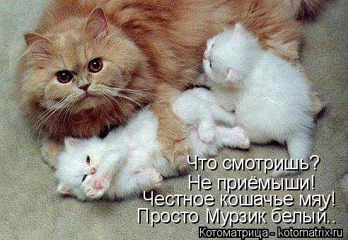 Котоматрица: Что смотришь? Не приёмыши! Честное кошачье мяу! Просто Мурзик белый..