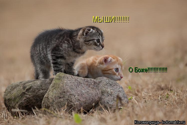 Котоматрица: О Боже!!!!!!!!!!!!! МЫШИ!!!!!!!!