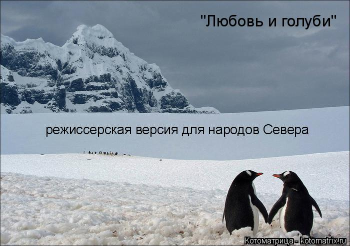"""Котоматрица: """"Любовь и голуби"""" режиссерская версия для народов Севера"""