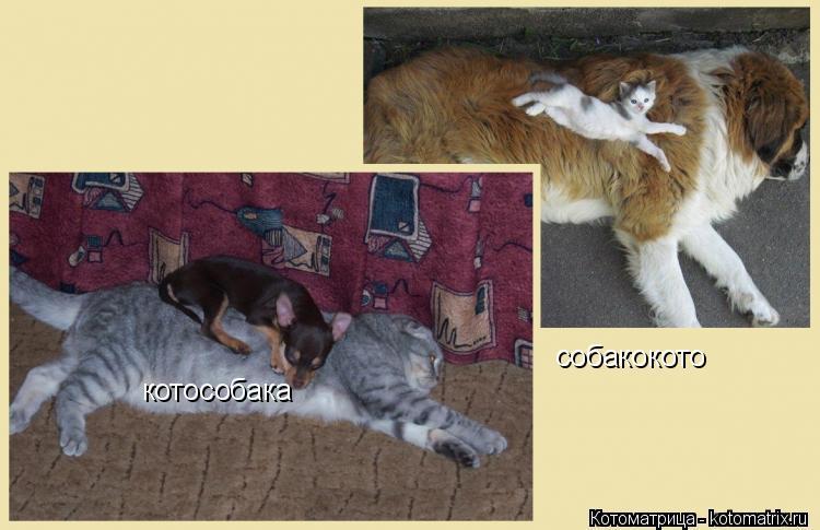 Котоматрица: котособака собакокото