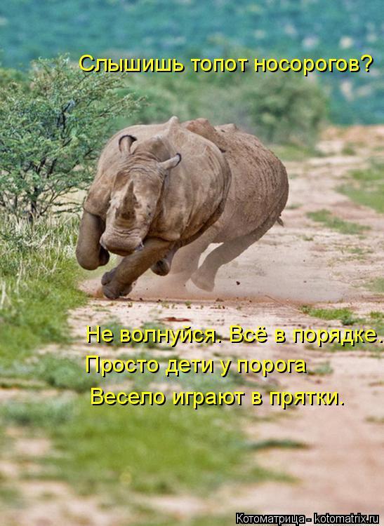 Котоматрица: Слышишь топот носорогов? Не волнуйся. Всё в порядке. Просто дети у порога Весело играют в прятки.