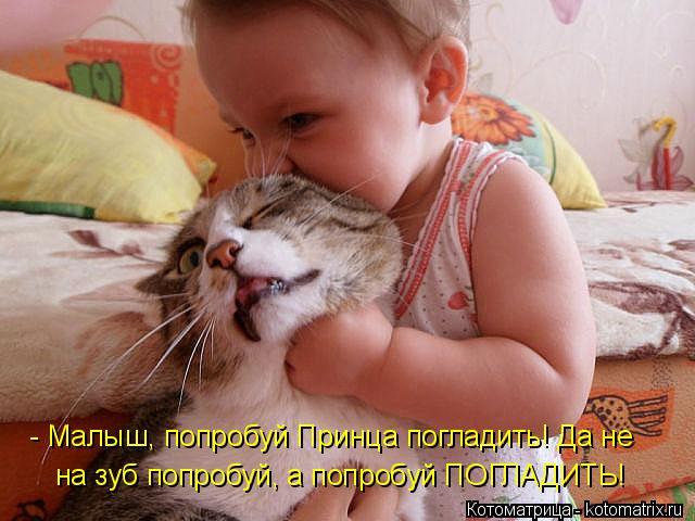 Котоматрица: - Малыш, попробуй Принца погладить! Да не  на зуб попробуй, а попробуй ПОГЛАДИТЬ!