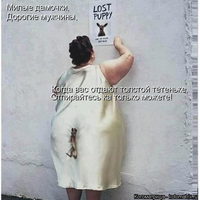 Котоматрица: Милые дамочки, Дорогие мужчины, Когда вас отдают толстой тётеньке, Отпирайтесь ка только можете!