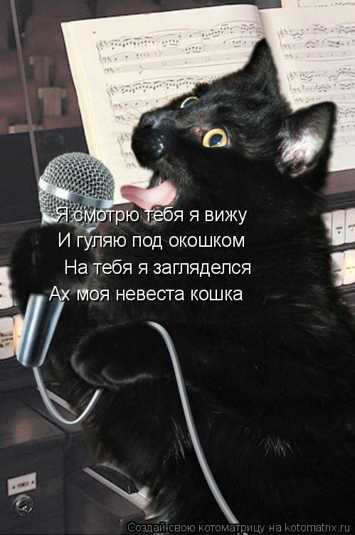 Котоматрица: Я смотрю тебя я вижу И гуляю под окошком На тебя я загляделся Ах моя невеста кошка