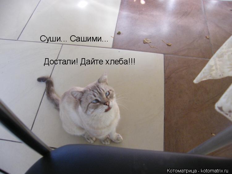 Котоматрица: Суши... Сашими... Достали! Дайте хлеба!!!